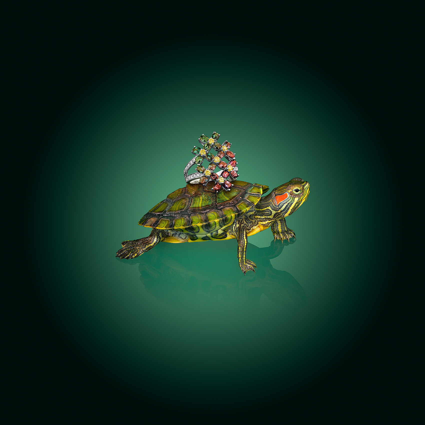 Ring-on-Turtle-Back